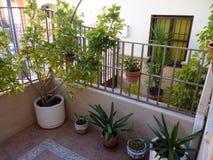 Portico con le piante in Spagna immagine stock libera da diritti