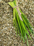 Portion of dried Chive Stock Image