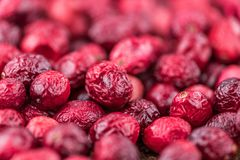 Portion of fresh Dried Cranberries selective focus; close-up sh. Some Dried Cranberries close-up shot; selective focus Royalty Free Stock Photography