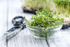 Portion of fresh Garden Cress Stock Images