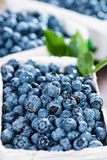 Portion of fresh harvested Blueberries Stock Image