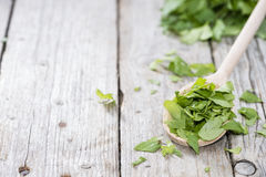 Portion of fresh Lovage Stock Image