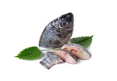Portion of fresh Tilapia fish on white Royalty Free Stock Photo