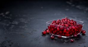 Some fresh Cranberries preserved selective focus; close-up sh. Portion of Preserved Cranberries as detailed close-up shot; selective focus Royalty Free Stock Images