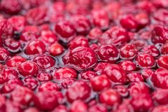 Some fresh Cranberries preserved selective focus; close-up sh. Portion of Preserved Cranberries as detailed close-up shot; selective focus Royalty Free Stock Photos