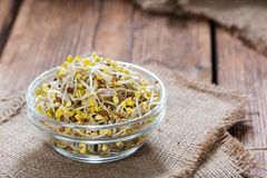Portion of Radish Sprouts Royalty Free Stock Images