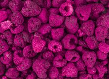 Portion of Raspberries dried, selective focus Stock Photography