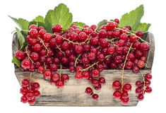 Portion of Red Currants (Isolated) Royalty Free Stock Photos