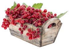 Portion of Red Currants (Isolated) Stock Photos