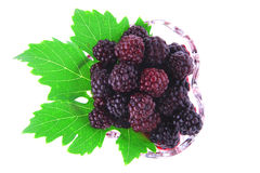 Portion of wild berry Royalty Free Stock Photo