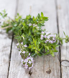 Portion of Winter Savory Stock Image