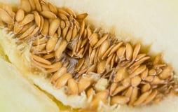 Portion of Yellow Honeydew Melon selective focus. Portion of fresh made Honeydew Melon close-up shot; selective focus Stock Photo