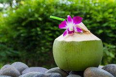 Portionkokosnötvatten och dekorera orkidéblomman Royaltyfri Foto