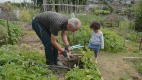 Portionmorfar på odlingslotten 2 Royaltyfria Bilder