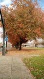Portland-Herbst Lizenzfreie Stockbilder
