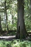 Portland Oregon Forest Hike Fotografia Stock Libera da Diritti
