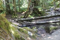 Portland Oregon hiking trip Mount St. Helen Stock Photo