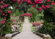 Portland Oregon rose garden. Walkway at the Portland rose garden in spring Royalty Free Stock Photo