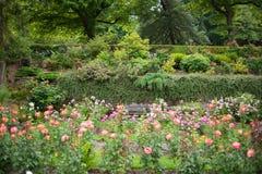 Portland Oregon rose garden Stock Photo