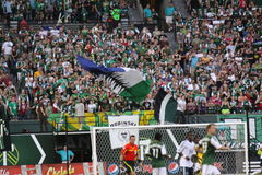 Portland Timbers fans Royalty Free Stock Photos