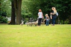 Family feeding ducks in the park stock images