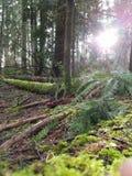 Portlandzki drzewny taniec Obrazy Stock