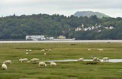 Portmeiron village on the River Dwyryd Estuary. Portmeirion Village on the River Dwyryd Estuary with grazing salt marsh lambs, Gwynedd in North Wales, UK Stock Photos
