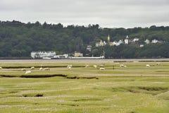 Portmeiron village on the River Dwyryd Estuary. Portmeirion Village on the River Dwyryd Estuary with grazing salt marsh lambs, Gwynedd in North Wales, UK Royalty Free Stock Photos