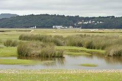 Portmeiron village on the River Dwyryd Estuary. Portmeirion Village on the River Dwyryd Estuary with grazing salt marsh lambs, Gwynedd in North Wales, UK Stock Images