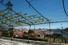 Porto. Vine grape on blue sky Royalty Free Stock Photos