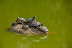 PORTO ALEGRE BRAZYLIA, MAJ, - 06, 2016: udziały żółwie na wierzchołku rockowy surroundede wodą w miasto parku Obrazy Stock