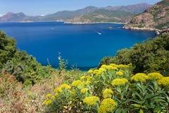 Porto bay landscape Royalty Free Stock Photo