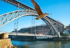 Porto brug en zeemeeuw Stock Afbeeldingen