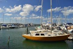Porto com os iate na cidade de Auckland, Nova Zelândia foto de stock royalty free