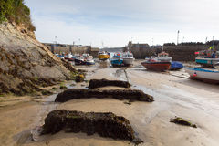 Porto Cornovaglia del nord Inghilterra Regno Unito di Newquay dell'alga Fotografia Stock
