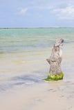 Porto de Galinhas beach Royalty Free Stock Photography