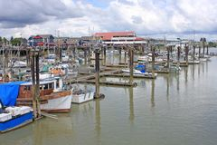 Porto de Steveston, Richmond, BC imagem de stock royalty free