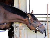 Porto del cavallo di Saratoga di piano matrice fotografie stock