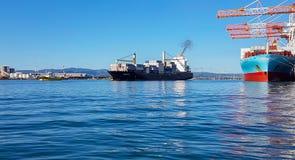 Porto del terminale di contenitore di Tauranga Fotografia Stock Libera da Diritti