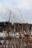 Porto dietro le erbe alte fotografia stock