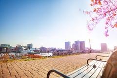 Porto interno no dia ensolarado, Baltimore, DM, EUA foto de stock royalty free