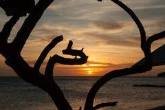 Porto Marie Sunset - boom stock afbeelding