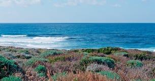 Porto Palmas plants. Plants on the coast of Porto Palmas Royalty Free Stock Photo