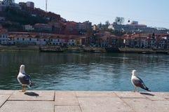 Porto, Portugal, Iberisch schiereiland, Europa Royalty-vrije Stock Fotografie