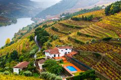 Fall Colors in Porto Vineyards royalty free stock photo