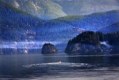 Porto profondo Vancouver BC Canada della baia dell'imbarcazione a motore Fotografia Stock