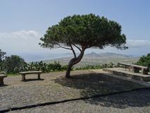 Lonesome Pine On Porto Santo stock images