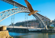 Porto seagull i most Obrazy Stock