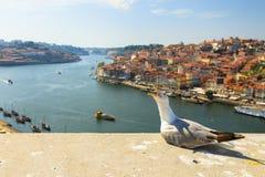 Porto skyline seagull Stock Photography