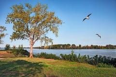 Porto Tolle, Venetien, Italien: PO-Delta-Parklandschaft Lizenzfreies Stockbild